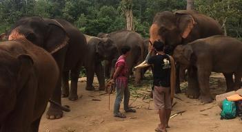Passeio com elefantes (1)