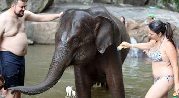 Passeio com elefantes (11)