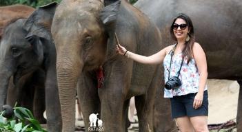 Passeio com elefantes (2)