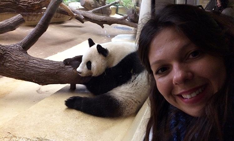 Visitando os ursos pandas no zoológico de Viena