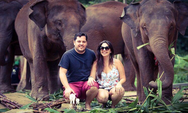 Passeio para interagir com elefantes