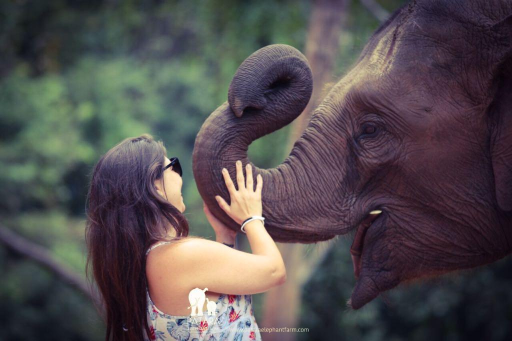 Passeio para interagir com elefantes em Chiang Mai